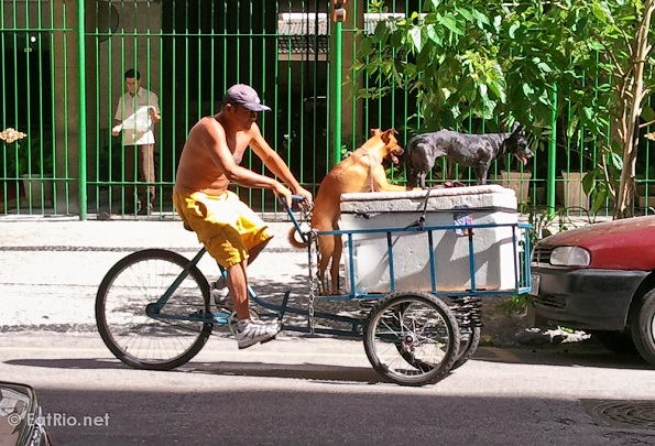Rio delivery tricycle