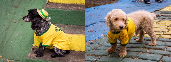brazil-football-dogs